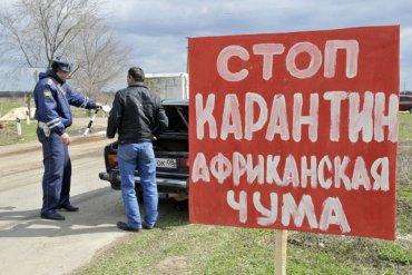 Крым страдает от Африканской чумы свиней, занесенной из Украины
